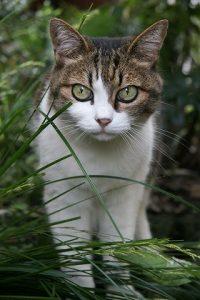 cat0060-066