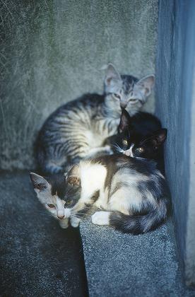 cat0013-001