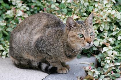 cat0068-066