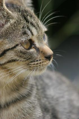 cat0072-066