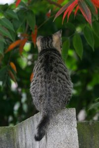 cat0079-066