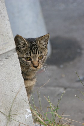 cat0108-066